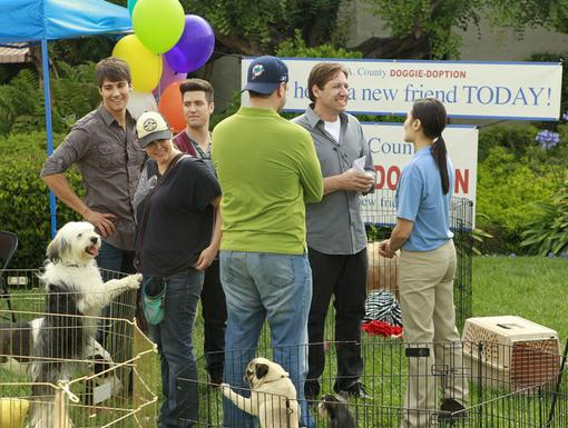 Big Success|Looks like the Doggie-Doption was a huge hit! Now, to get these twelve dogs home...