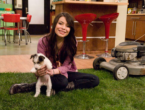 Puppy Potty Training|It's easy to potty train a puppy when you've got a lawn in your living room. Wait, what?!