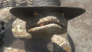 Rattlesnake Jake