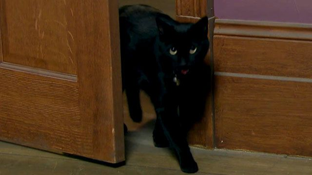 "House of Anubis: ""House of Kidnapping: Meow"""