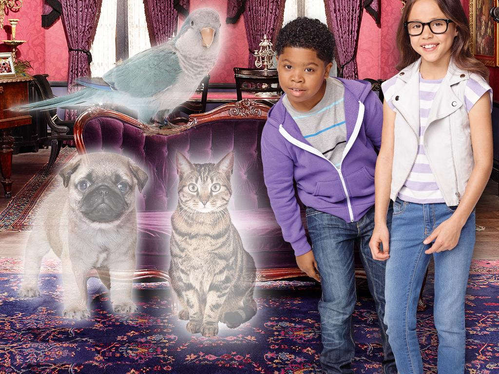 10 Signs You Have A Ghost Pet