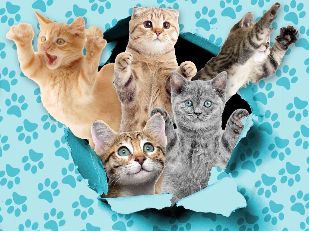 Cat Crashers!