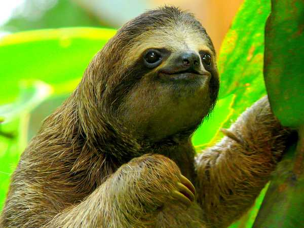 No Stress Sloth