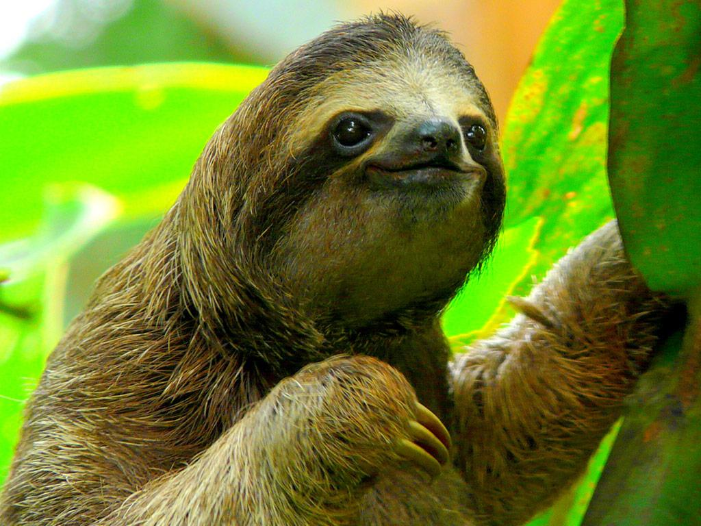 No Stress Sloth