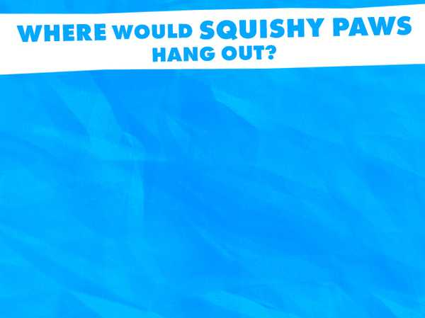 Where would Squishy Paws hang out?