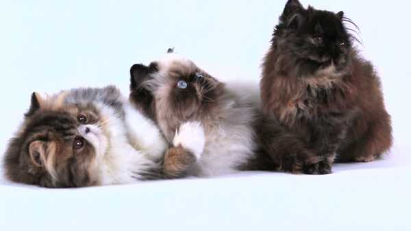 "Bella and the Bulldogs: ""Cat Chat"""