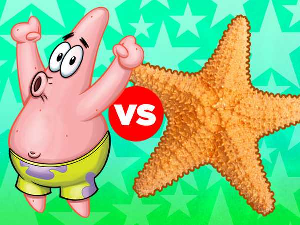 "SpongeBob SqaurePants: ""Real Starfish vs. Patrick"""