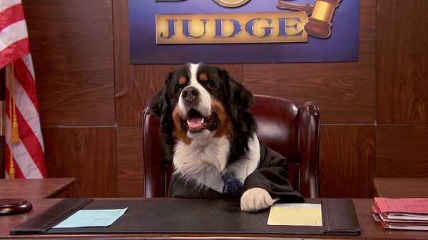 "Henry Danger: ""Tonight On Dog Judge"""