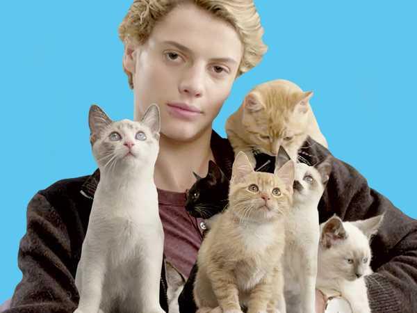 """Rufus 2: """"Jace Loves Kittens"""""""