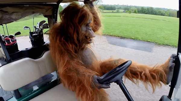"Rank The Prank: ""Orangutan Escape"""