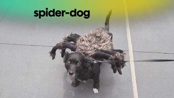 Spider Dog Prank