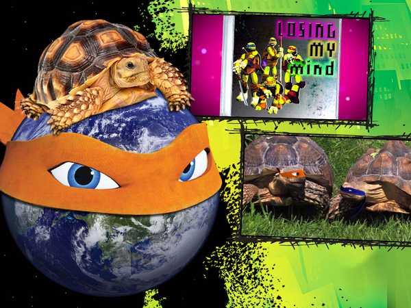 Type 1: TMNT World Turtle Day