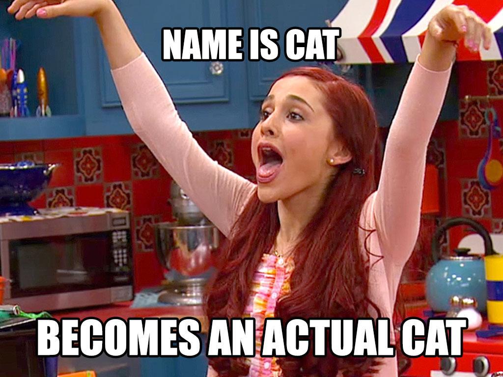 Oh My Cat!