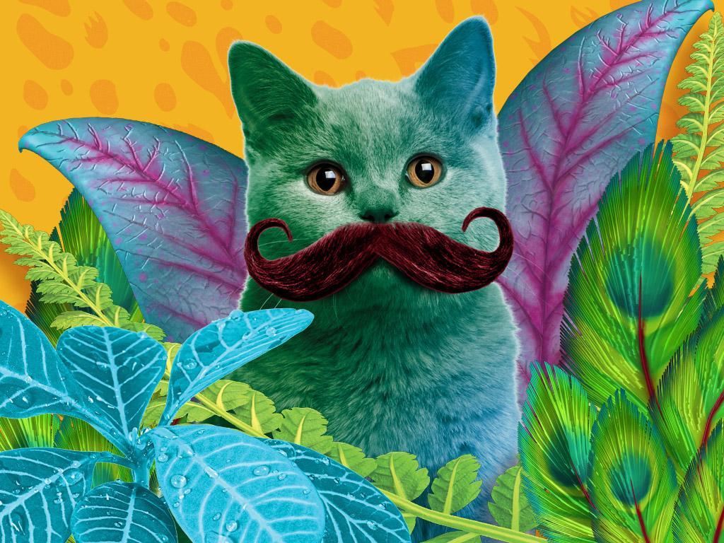 Meow-stache