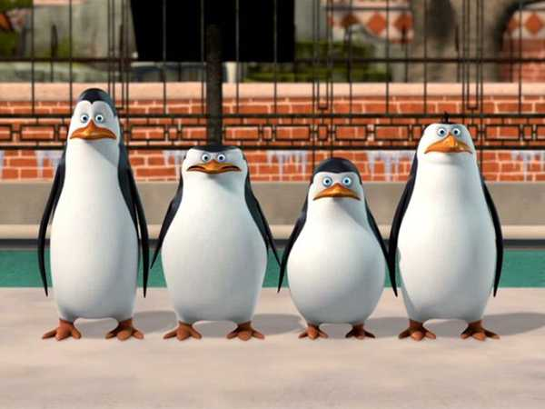 Penguins Of Madagascar: A Trip To The Zoo
