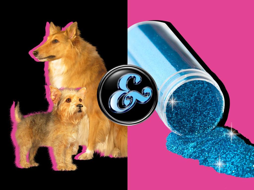 Dogs & Glitter!