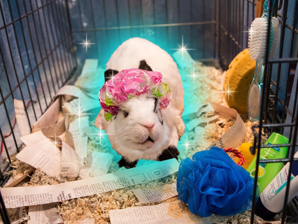 Rabbit Roomie