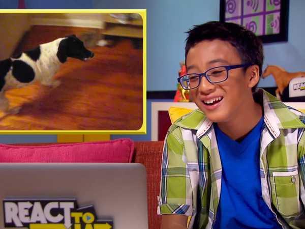 "React to That: ""Dog Slams Door"""