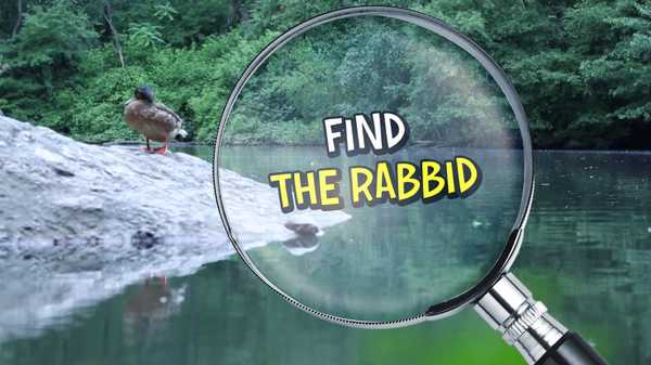 Rabbids Invasion: Find the Rabbid!