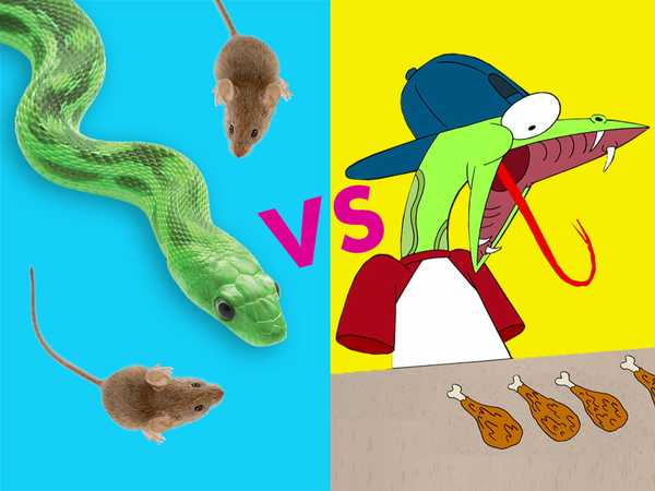 "Sanjay and Craig: ""Real Snake vs. Craig"""