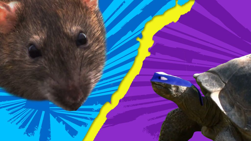 Teenage Mutant Ninja Turtles: Not So Ninja Turtles Video Clip | Nick Videos