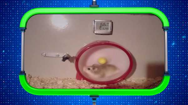 "Webheads: Hamster Wheel: ""Round and Round"""