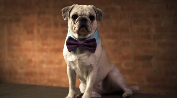 Pup Collar