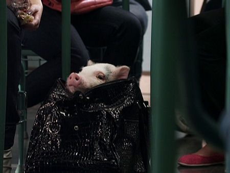 Porcelina, Fiona's pet pig on Degrassi