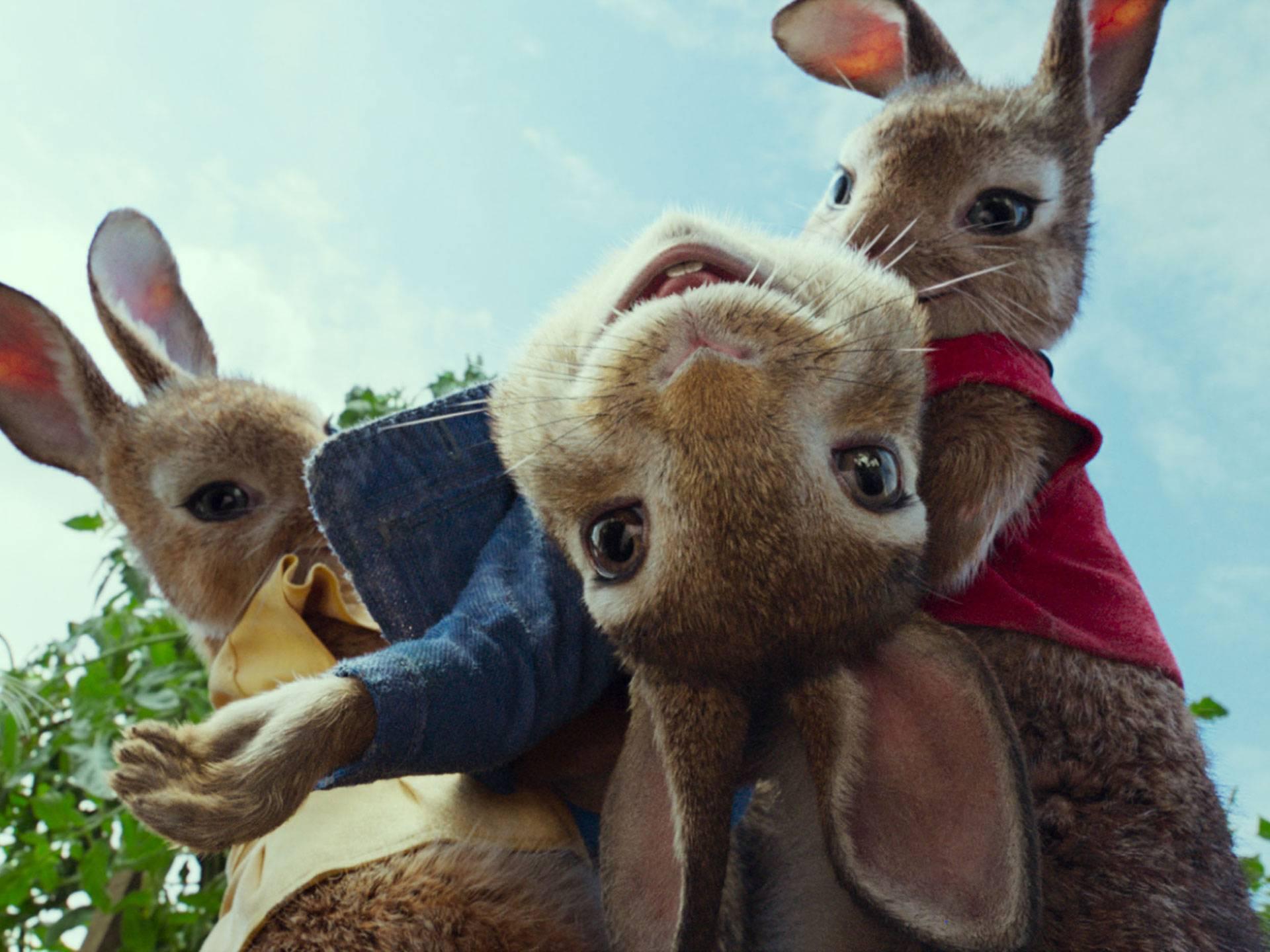mgid:file:gsp:scenic:/international/nick-intl/images/series/orange-carpet/ep-24-peter-rabbit/peter-rabbit-04.jpg