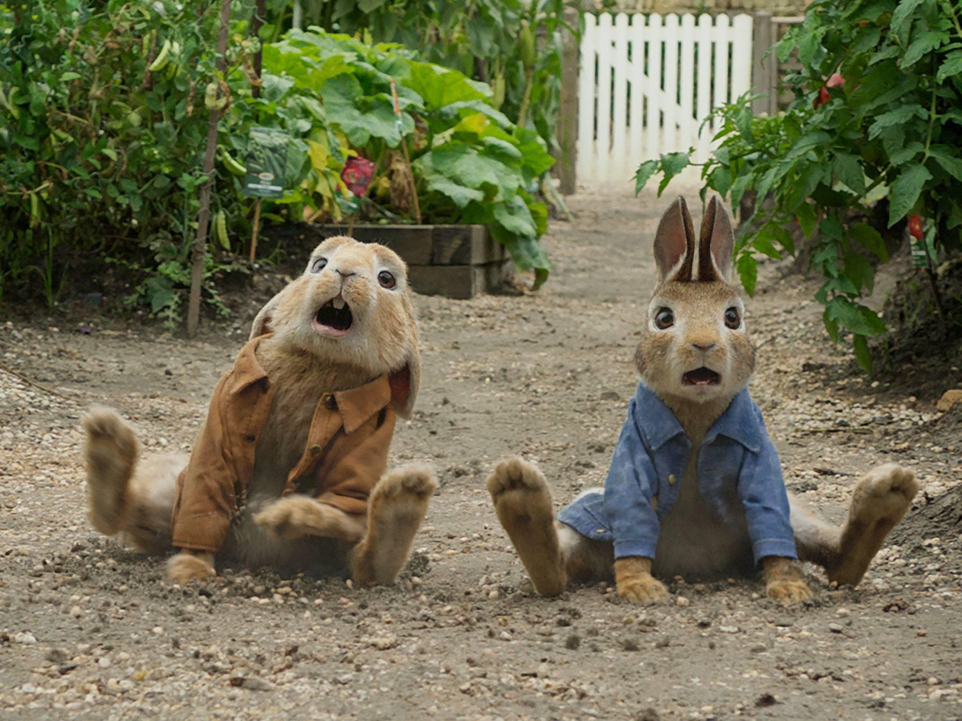 mgid:file:gsp:scenic:/international/nick-intl/images/series/orange-carpet/ep-24-peter-rabbit/peter-rabbit-07.jpg